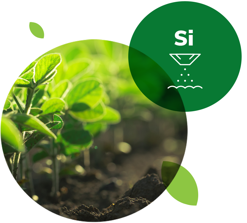 Agripower Silica Science, investing in research and development