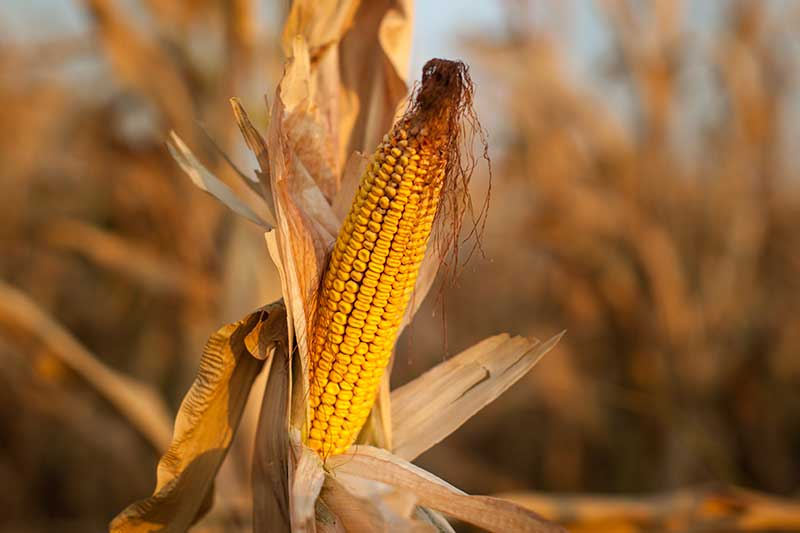 Agripower, Climate Smart Agriculture, Reducing crop losses from stress